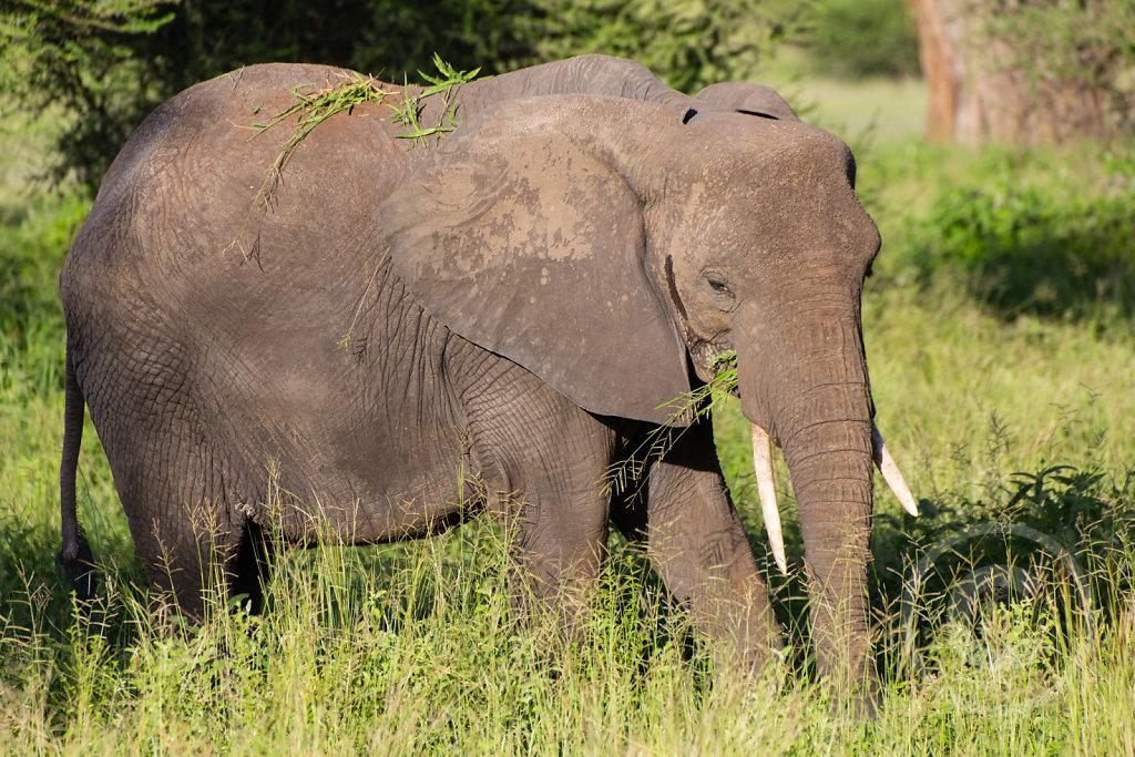 Elephants are amazing