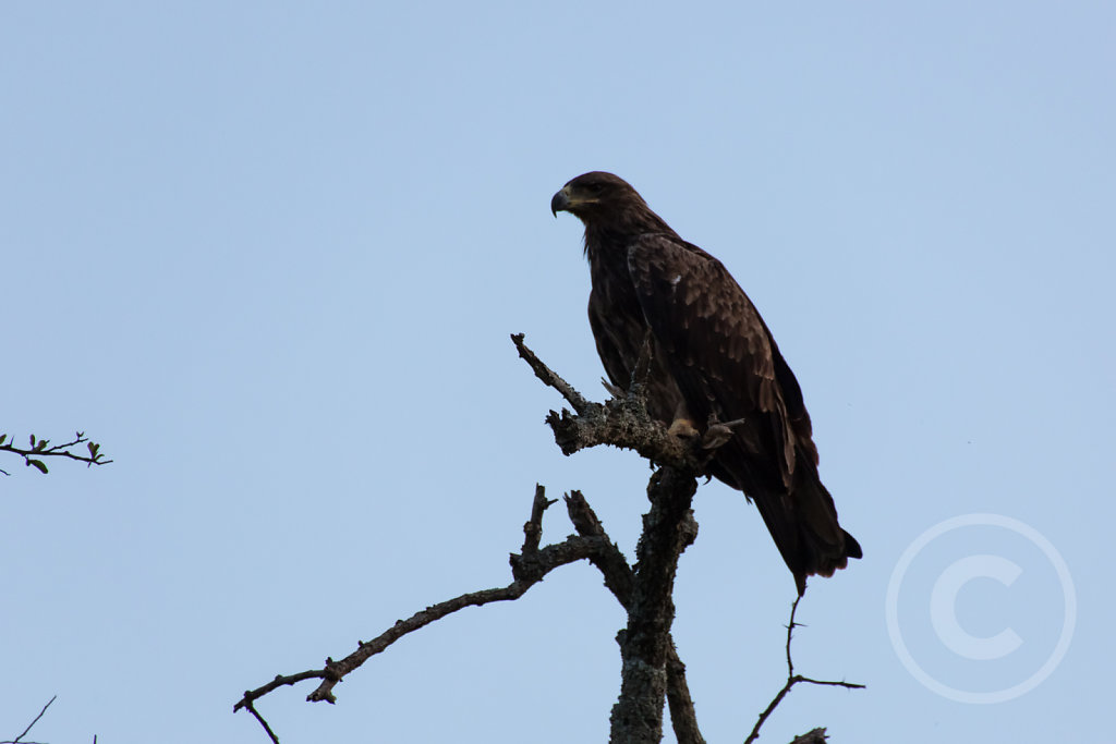 Bigger bird