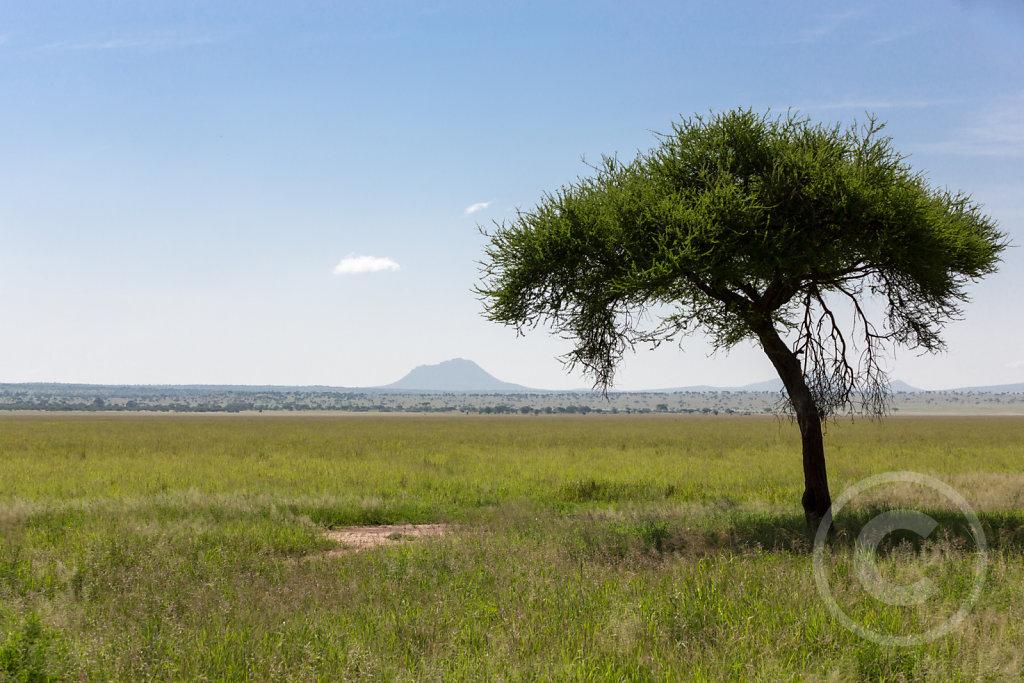 Wonderful landscape of Tarangire
