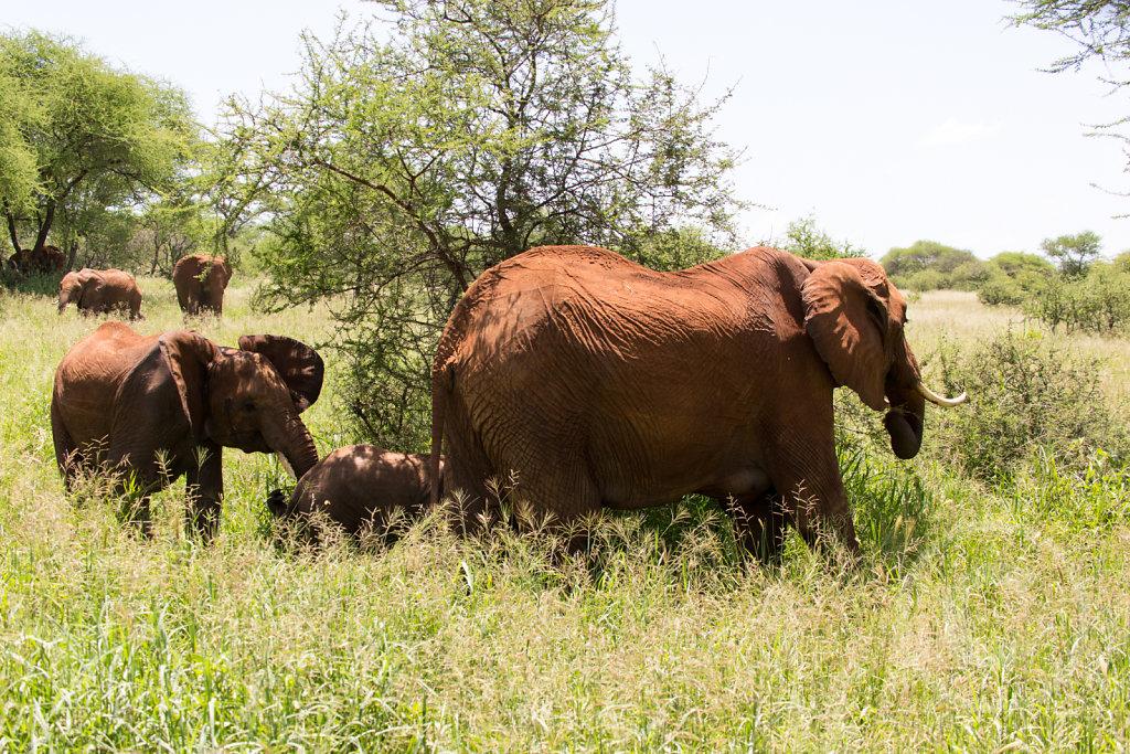 Three generation of elephants