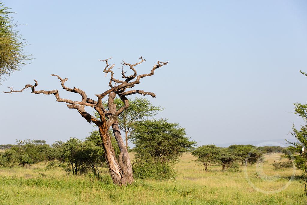 Amazing landscape in tansania