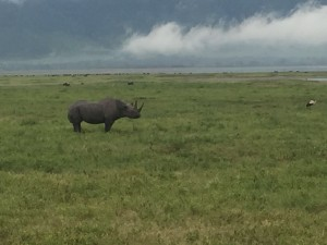 Spitzmaulnashorn im Ngorogoro-Krater. (c) Jörg Neidig. All rights reserved.